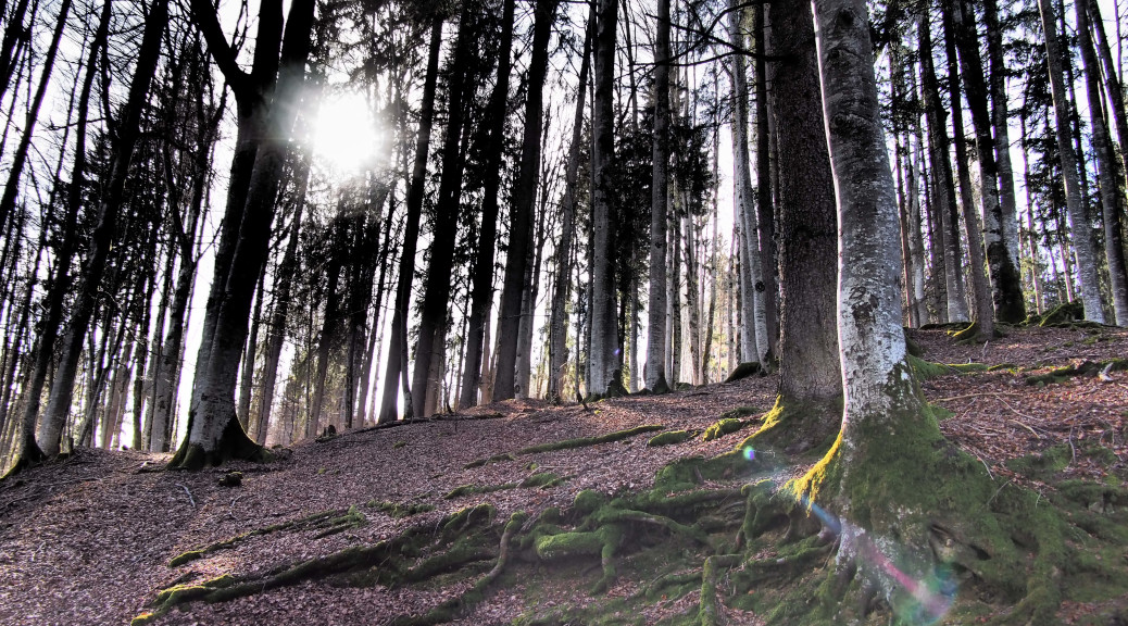 Licht im Wald_2