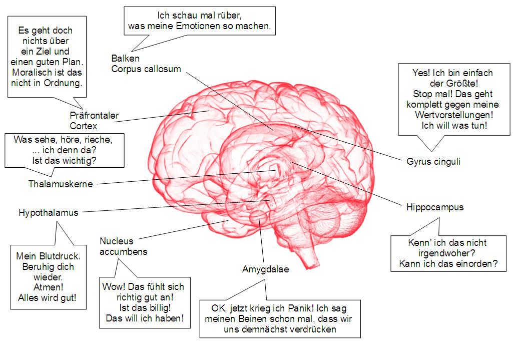Niedlich Gehirn Diagramm Mit Funktionen Beschriftet Fotos ...